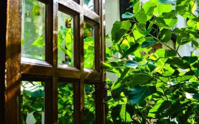 Basic methods to protect wooden doors from sun damage